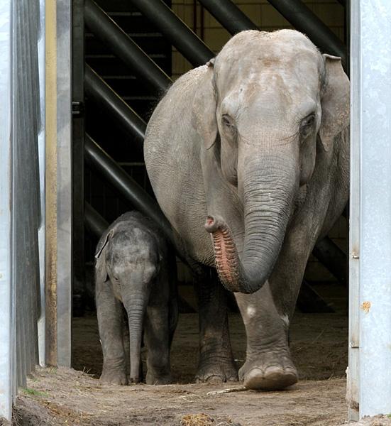 Moeder (Htoo Yin Aye) en de kleine Thuya