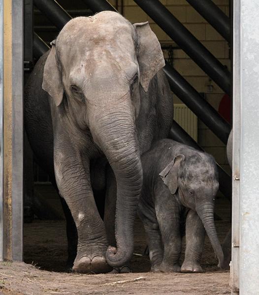 Mams en de kleinste
