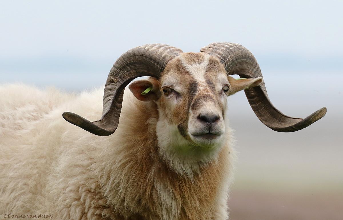 Ram - van Ewijcksluizen